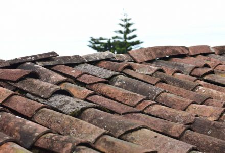 Why are my roof shingles curling?